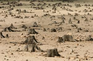 Forest-destroyed_300wide