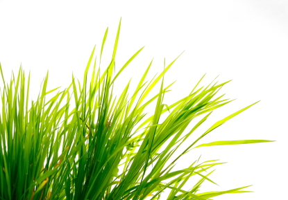 GE grass