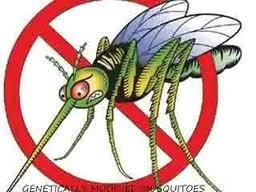 gm-mosquito