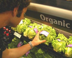 Organic Standards in Danger—Unless You Make Your Voice Heard