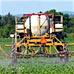 GMO Fact Check